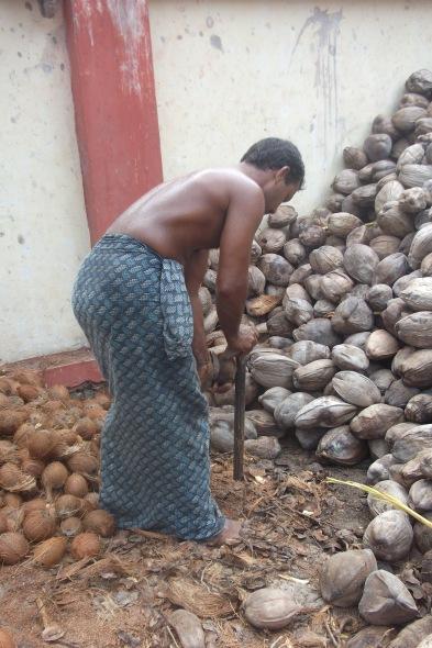 Aufbrechen der Kokosnüsse © Wolfgang Stoephasius