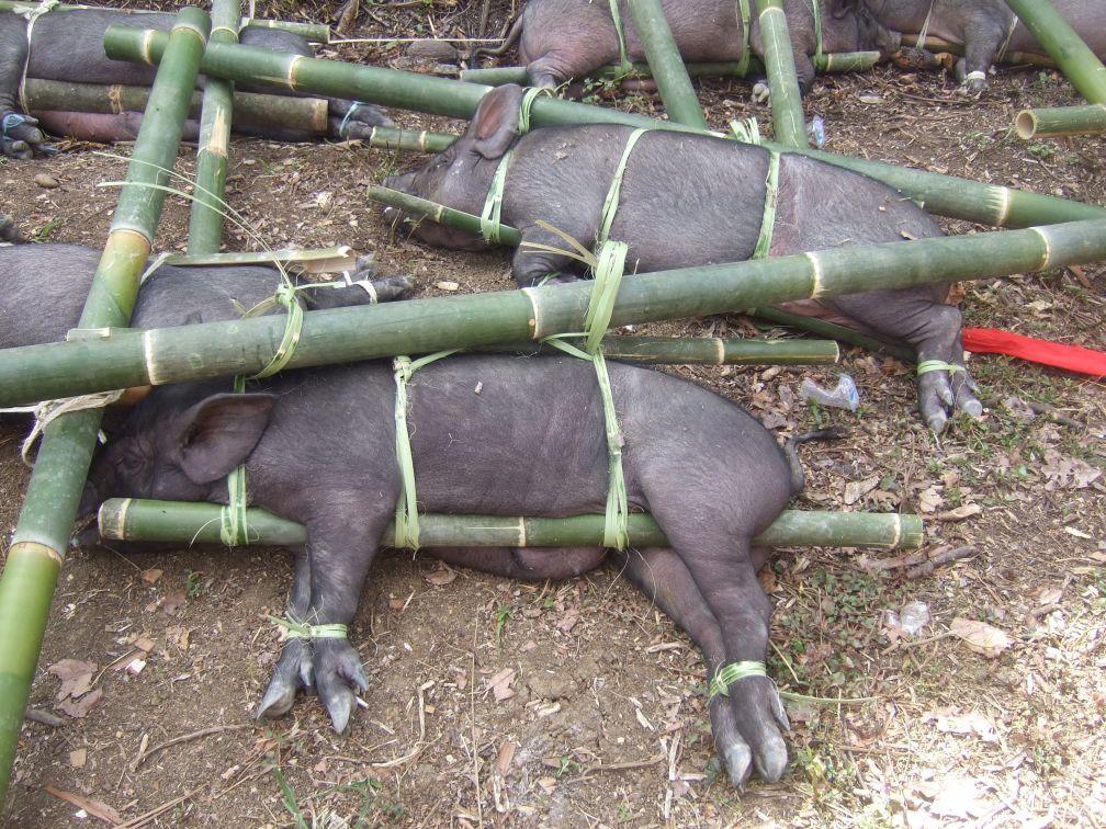 Arme Schweine © Wolfgang Stoephasius