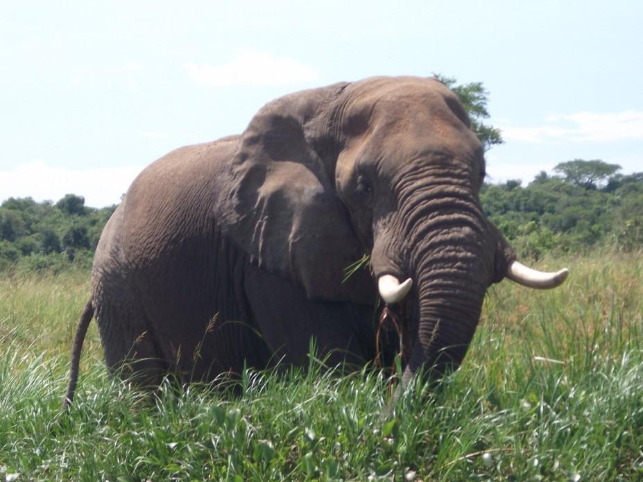 Elefant © Wolfgang Stoephasius