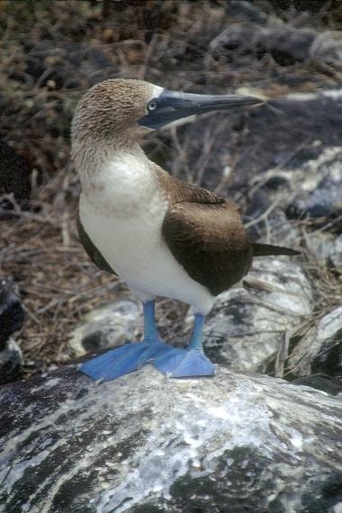 Galapagos91 (18)