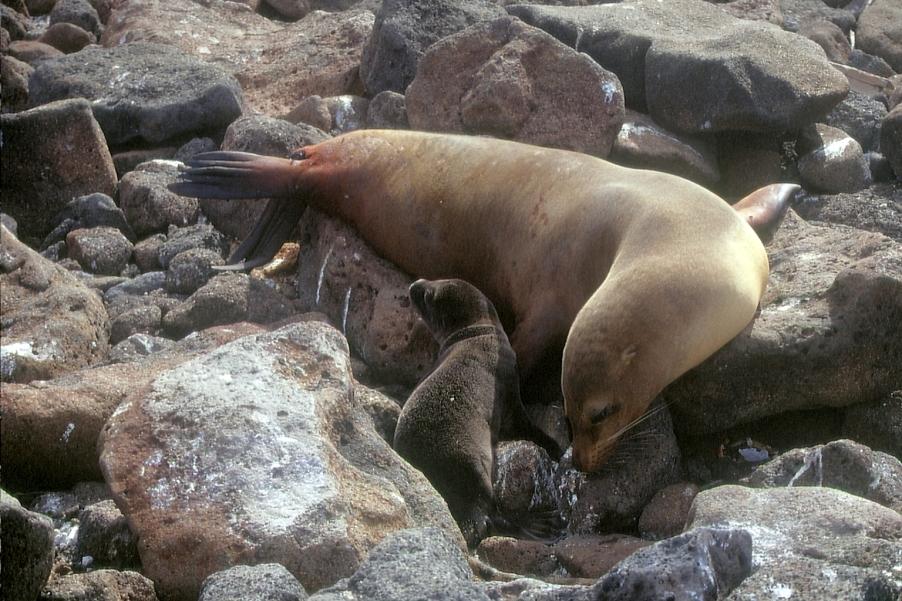 Galapagos91 (21)