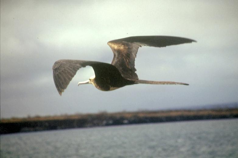 Galapagos91 (25)