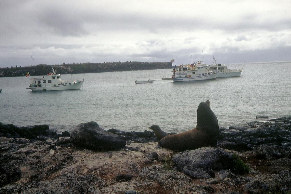 Galapagos91 (29)