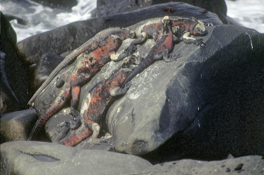 Galapagos91 (35)